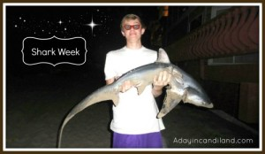 Shark week at the beach