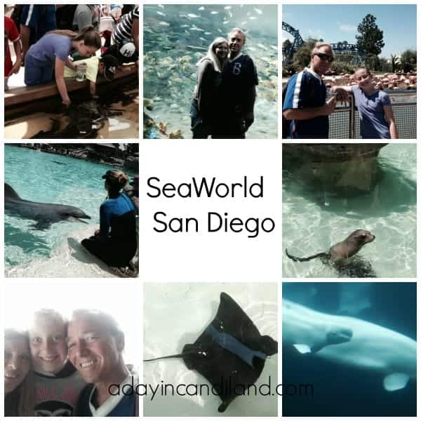 Sea World San Diego Collage