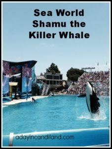 Shamu at Sea World