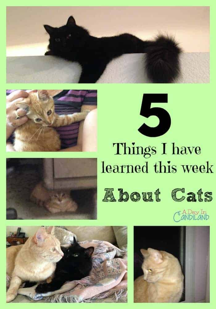 5 Things I have learned this week about cats collage