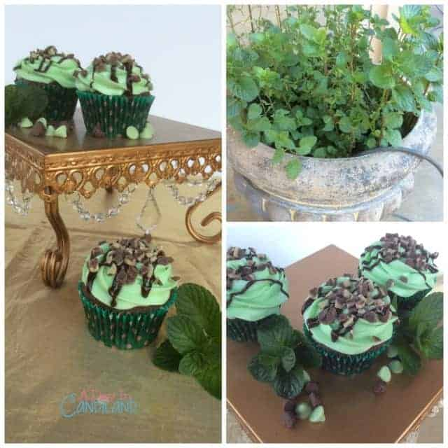 Chocolate Mint Cupcakes Collage