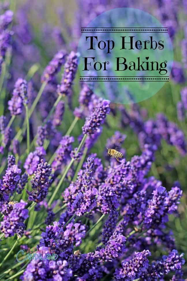 lavender and other top herbs to bake with tips in the kitchen