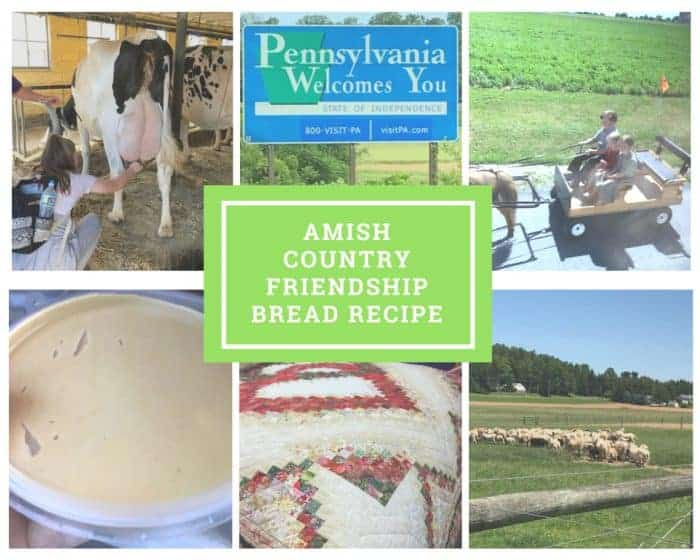 Amish Country, Milking Cows, buggy rides, peanut butter, quilts and sheep.