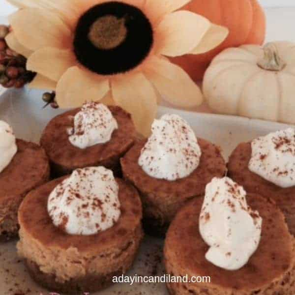 Mini Pumpkin cheesecakes with sunflower and pumpkin on a white tray